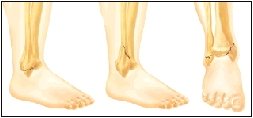 Image of ankle bones