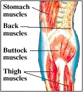 Image of muscles